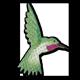 bio-hummingbird